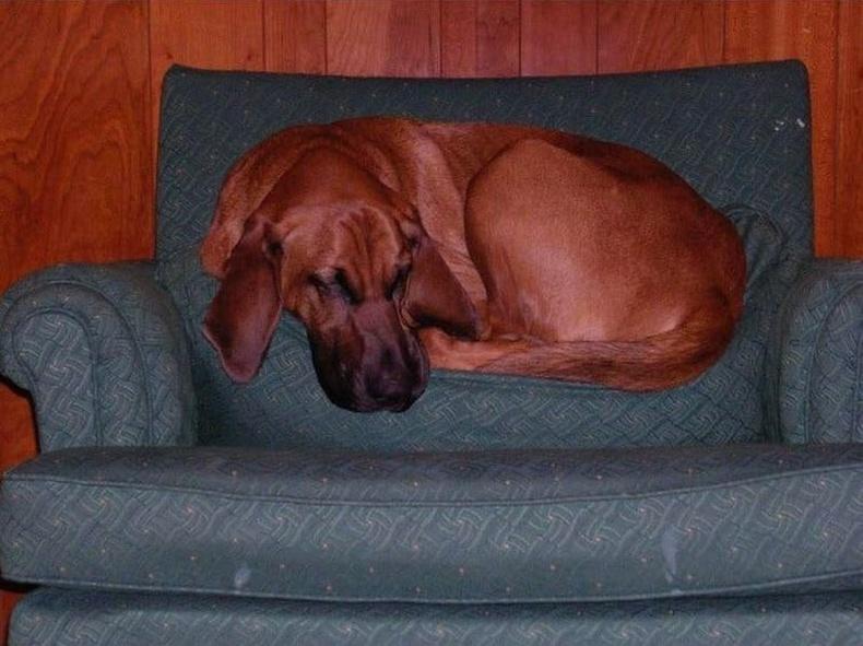 Хөөрдөг нохой