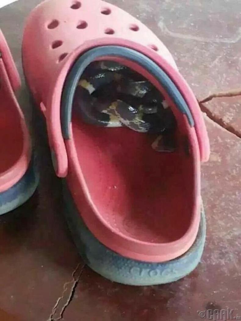 Гутлаа өмсөхийн өмнө шалгах хэрэгтэй