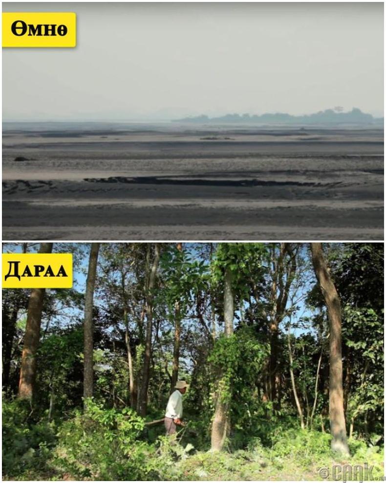 Ганцаараа бүхэл бүтэн арлыг аврахаар 550 га ой суулгажээ