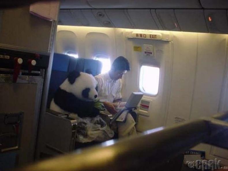Энэ яг л панда баавгайн хүргэлтийн үйлчилгээ шиг харагдаж байна!