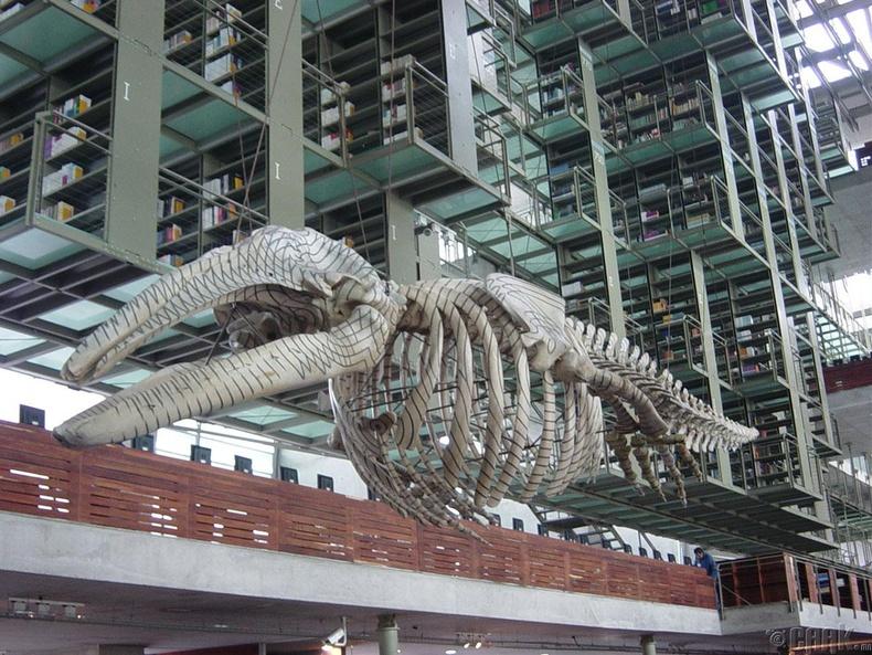 Хосе Васкончелосын номын сан, Мексик