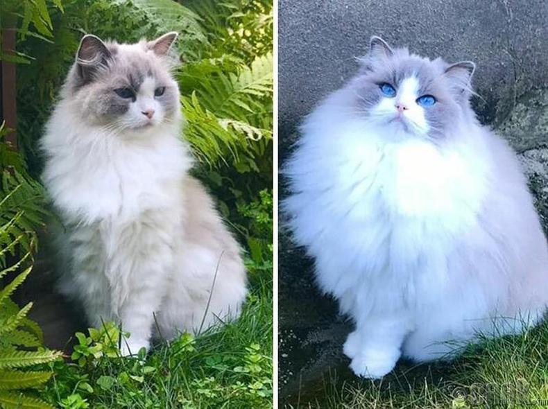 Муурын үс өвөл зуны ялгаа