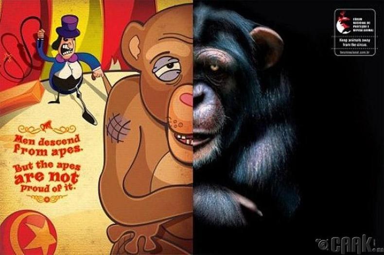 Амьтныг хэрцгийлэхийн эсрэг зурагт хуудас