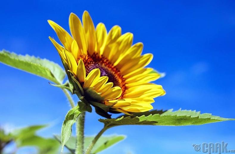 Цэцэг жижиг үрээс эхэлдэг