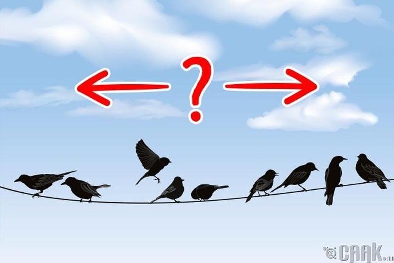 Шувууд яаж хаашаа нисэхээ мэддэг вэ?