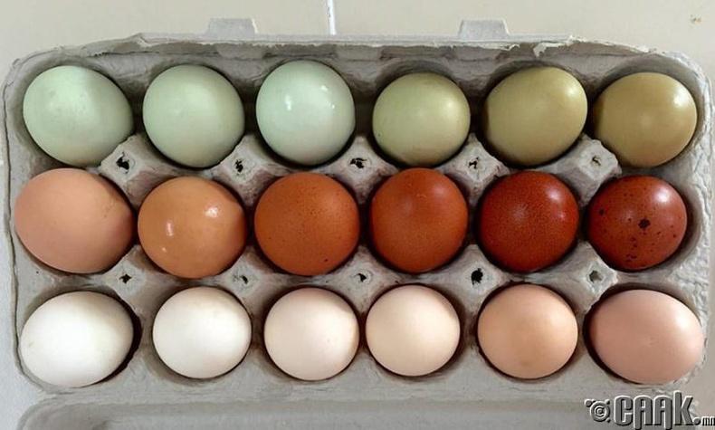 Аль өндөг нь илүү тэжээллэг, эрүүл мэндэд тустай бол?
