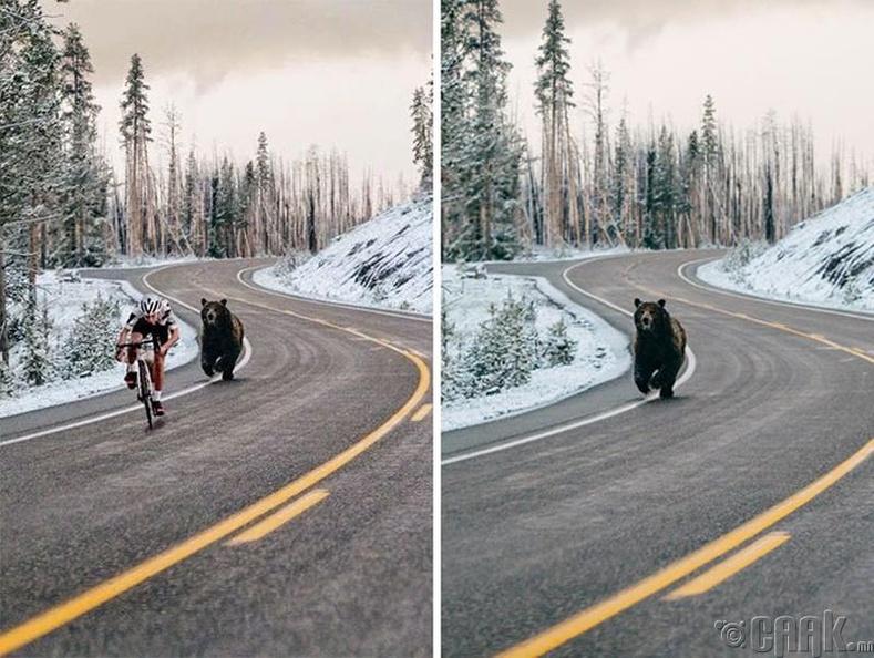 Баавгай ийм хурдан биш