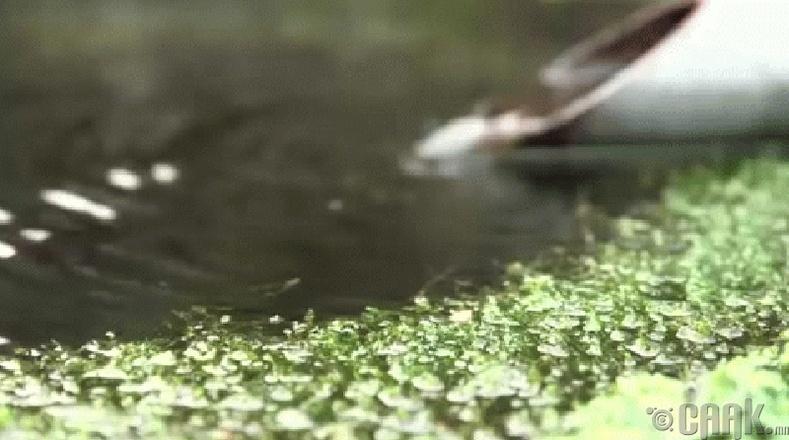 Гудамжны усны сувгууд дотор загас сэлдэг