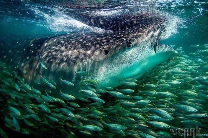 Торонд орж буй загаснууд - Гэрэл зурагчин Мэтт Потенски (Matt Potenski)