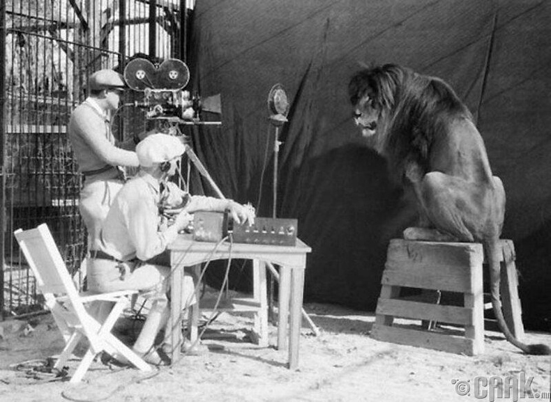Метро Голдвин Майер компани 1929 онд домогт дэлгэцийн баатар болох арслангийн дүрсийг бичиж байна