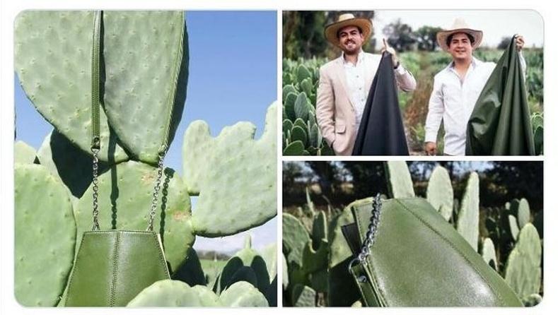 Амьтны арьснаас илүү зөөлөн материалыг кактуснаас гаргаж авчээ