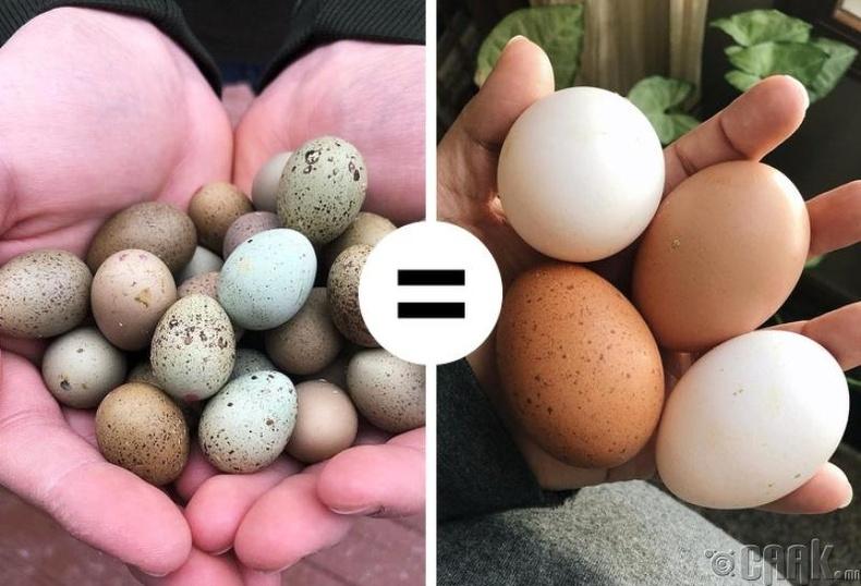 Бөднө шувууны өндөг энгийн өндөгнөөс илүү тэжээллэг бус