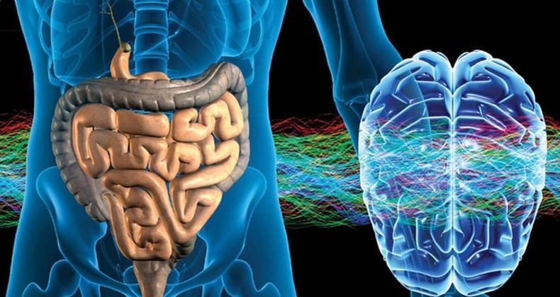 Хүний гэдсэн дэх бактери тархинд яаж нөлөөлдөг вэ?