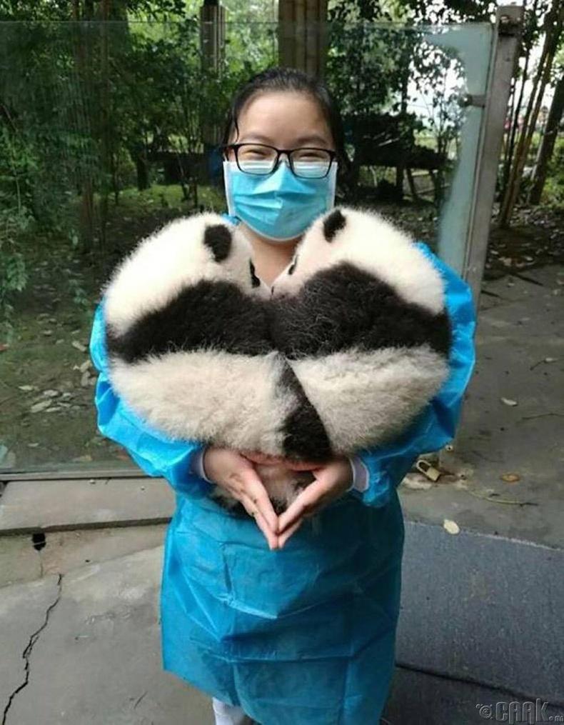 Панданы бамбаруушнууд