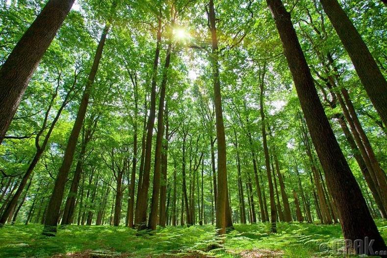 Сүүн замд байдаг оддоос илүү их мод дэлхий дээр  байдаг