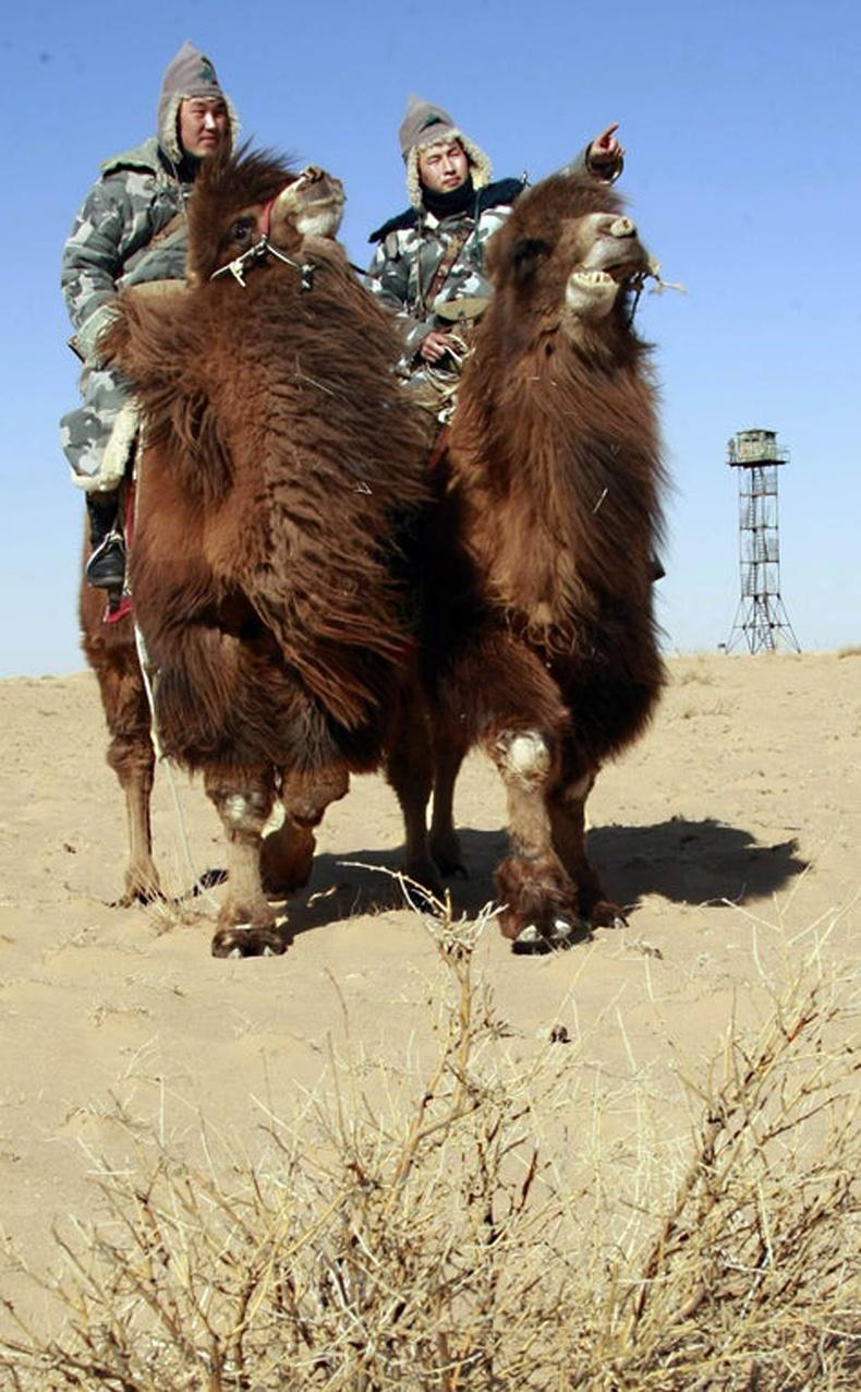 Монголын тэмээтэй хилчид