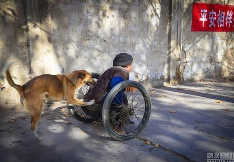 Үнэнч нохойны бахдам түүх