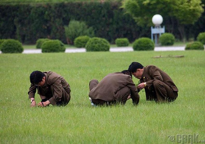 Өвс зулгааж буй цэргүүд , Пхеньян -2009 он