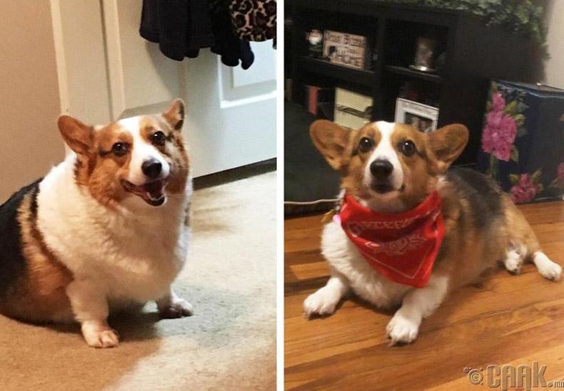 """""""2017 онд үрчилж авсан нохой маань улам л хөөрхөн болоод байх юм"""""""