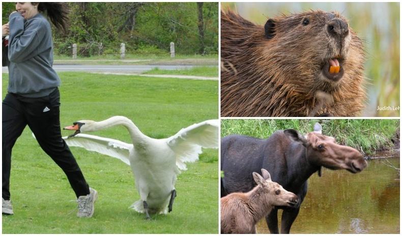 Гэмгүй төрхтэй ч хүнд маш аюултай 15 амьтан