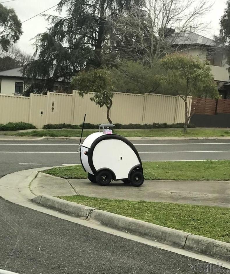 """""""Австралийн Мельбурн хотод ийм нэг жижигхэн зүйл явган хүний замаар явж байх юм?"""""""