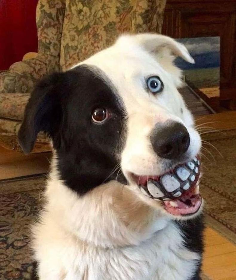 Сайн нохой бөмбөг зуугаад л хорон санаатай болох нь