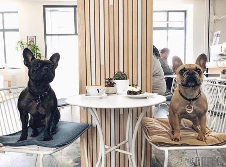 Кафе руу нохойтойгоо ордог