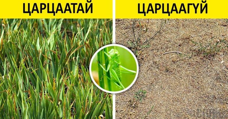 Царцаа хөрсний эрүүл байдлыг хангадаг