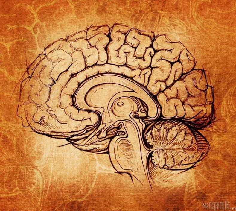 Тархи