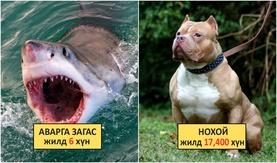 Дэлхий дээрх хамгийн аюултай 20 амьтан