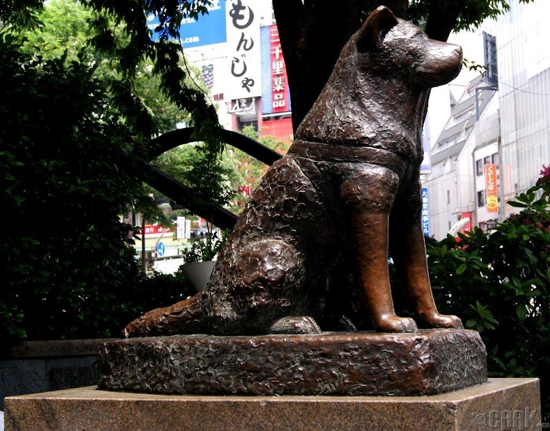 Хачико: Галт тэрэг хүлээж буй нь