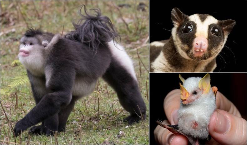 Дэлхий дээр үнэхээр байдаг гэхэд итгэмээргүй хачирхалтай төрхтэй амьтад