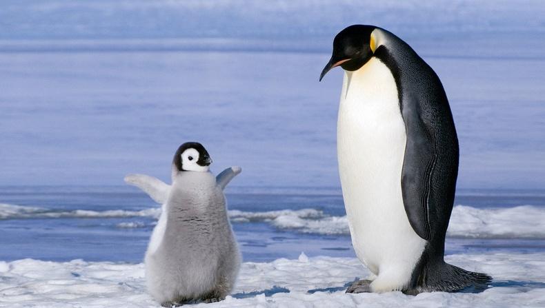 Амьтны ертөнц дэх хамгийн шилдэг аавууд