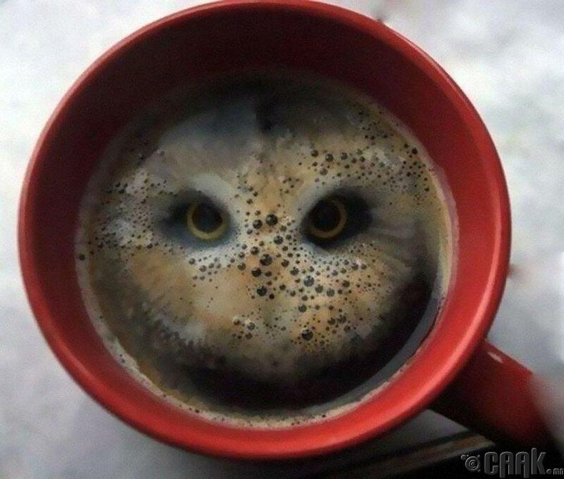 Цагираг чипсийг аягатай кофе дотроо унагаатал...