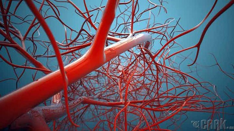 Хүний биеэр цус урсахдаа 60.000 милийг туулдаг бөгөөд энэ нь хүн дэлхийг 2.5 удаа туулсантай тэнцэнэ