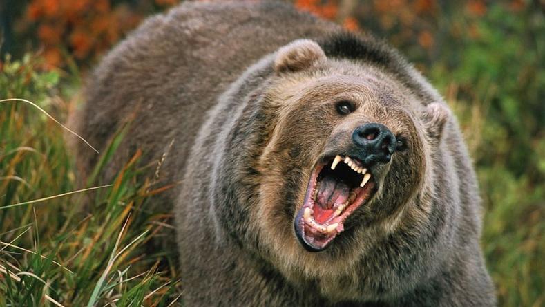 Дэлхийн хамгийн аюултай 10 амьтан