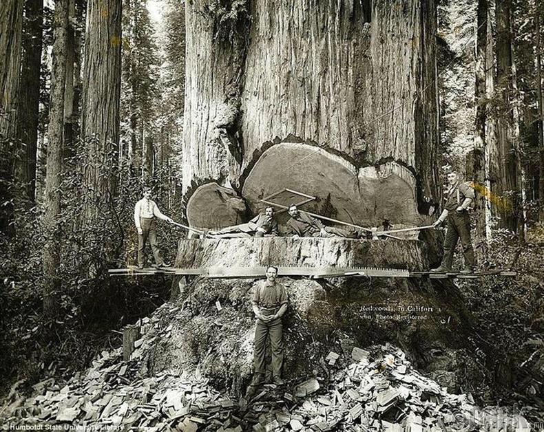 Мод бэлтгэгчид - АНУ, Калифорни муж, 1915 он