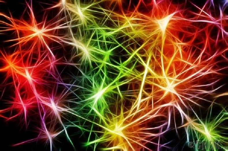 Эмэгтэй хүний тархины эс илүү нягт холбоотой