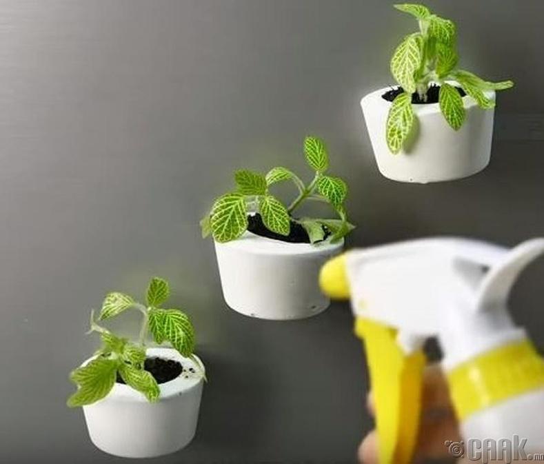 Сэнж нь хагарсан аягаа хананд тогтоож цэцгийн сав болгоорой