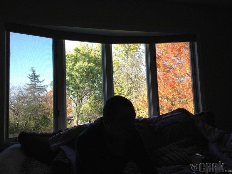 Өнгө өнгийн цонхноос болж энэ айлын хашаанд 4 улирал зэрэг болж байна уу гэмээр