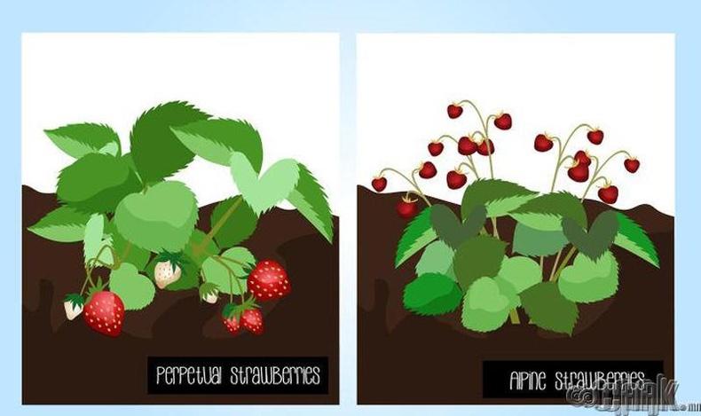 Зэрлэг жимс идэх