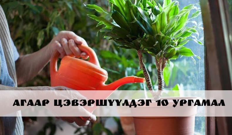Агаарыг цэвэршүүлж, таныг эрүүл байлгах ургамлууд
