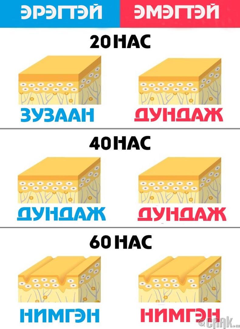 Зузаан арьстай