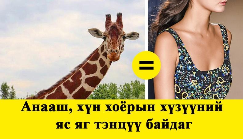 Та үүнийг мэдэх үү?