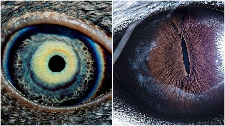 """""""Энэ ямар амьтны нүд вэ?"""" (Армен зурагчны гайхалтай фото төсөл)"""