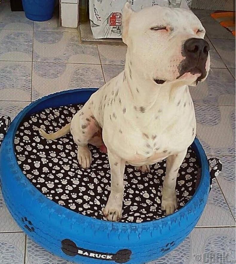 Хуучин дугуйг нохойны ор хийжээ