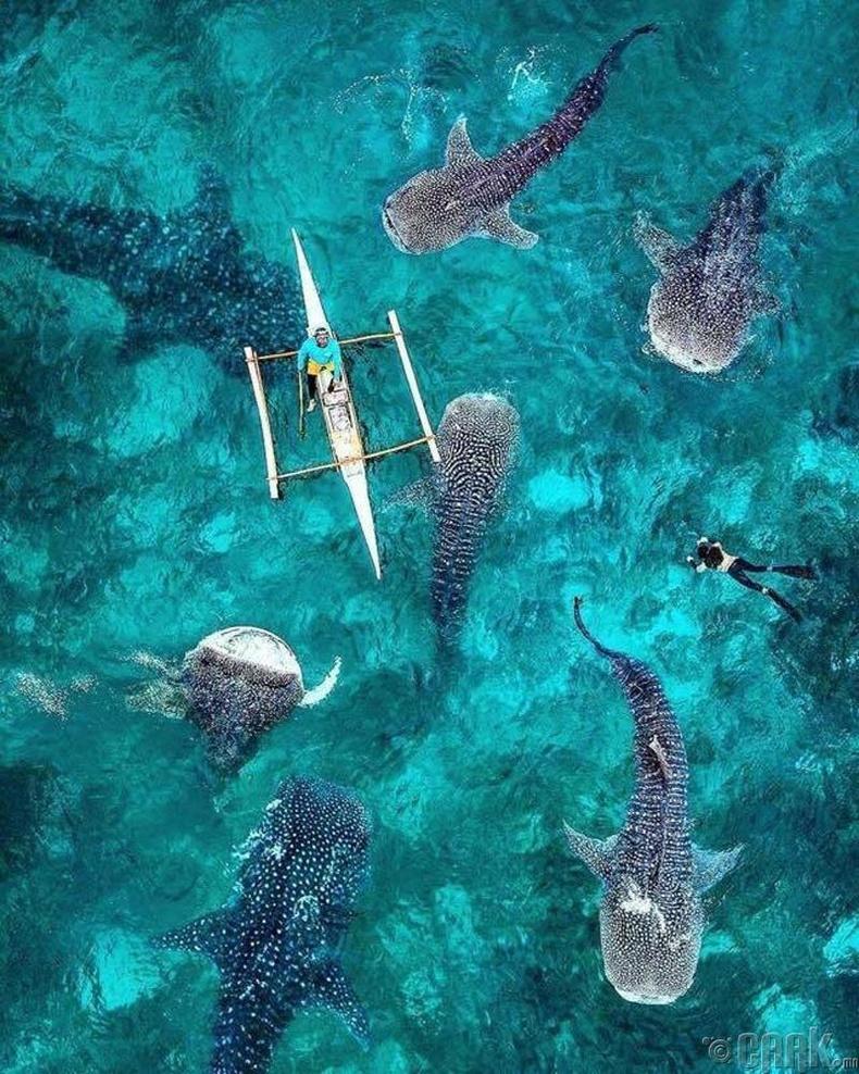 Филиппиний аварга загас