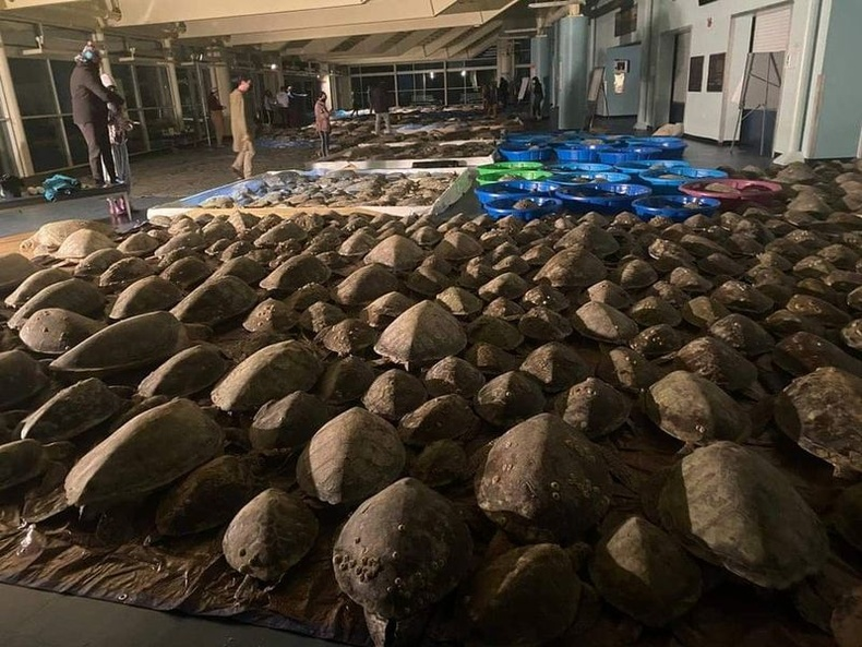 Яст мэлхийнүүдийг хүйтнээс хамгаалсан нь