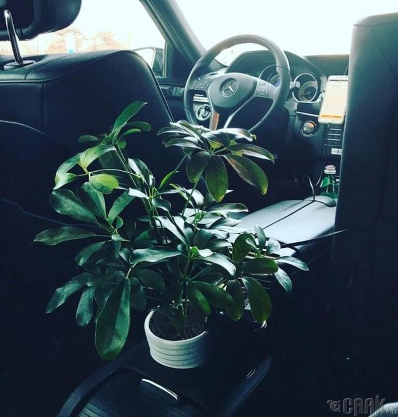 Агаар цэвэршүүлэх зорилгоор дотроо тасалгааны ургамал байрлуулсан такси (Хятад)