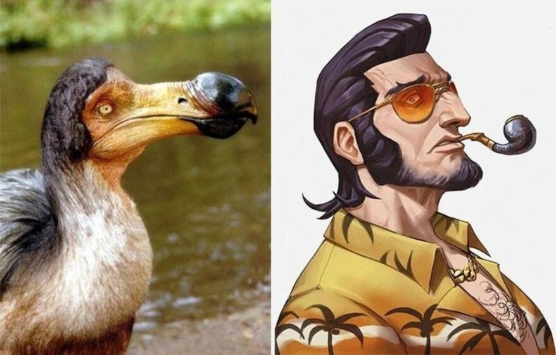 Додо шувуу